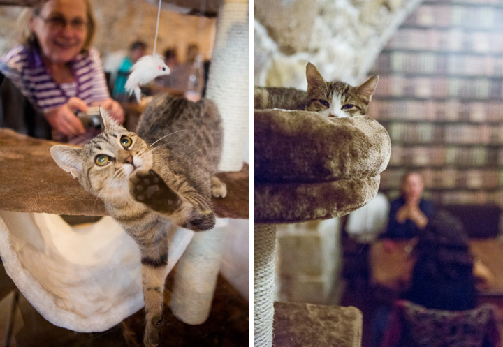 Le Café des Chats in Paris