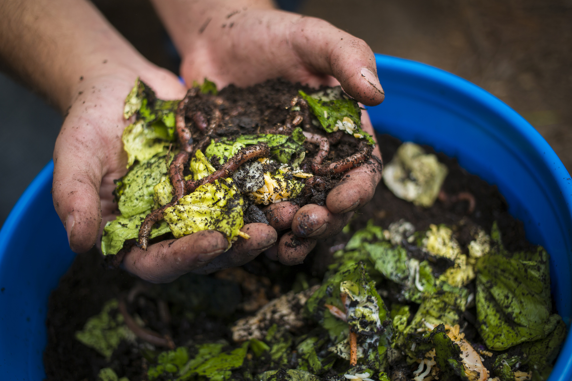 Composting in Paris