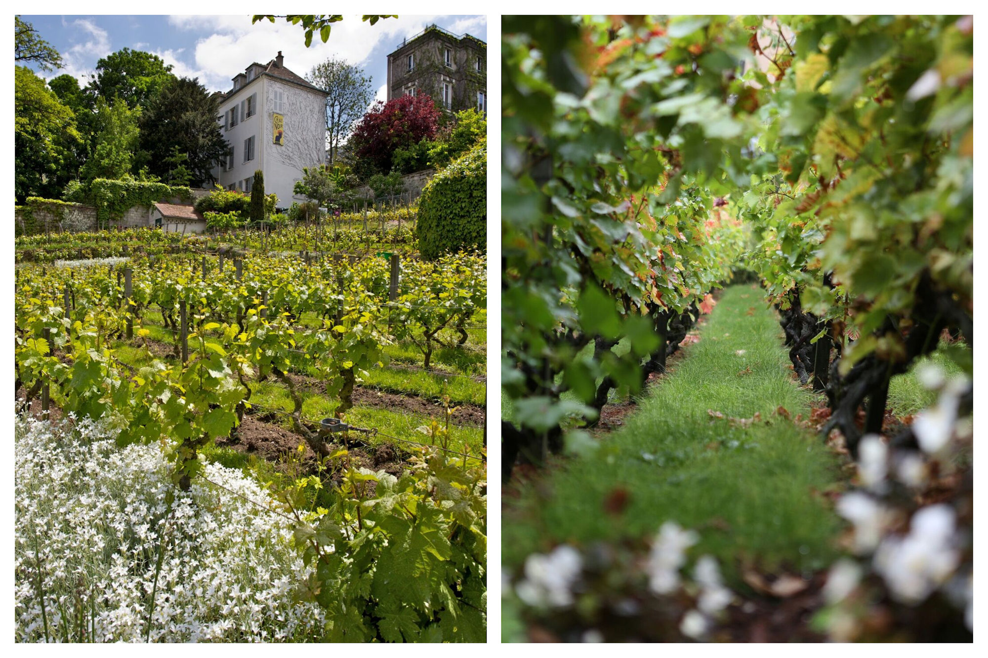 One event not to miss in Paris in October is the Fête des Vendanges in Montmartre's hidden vineyard.