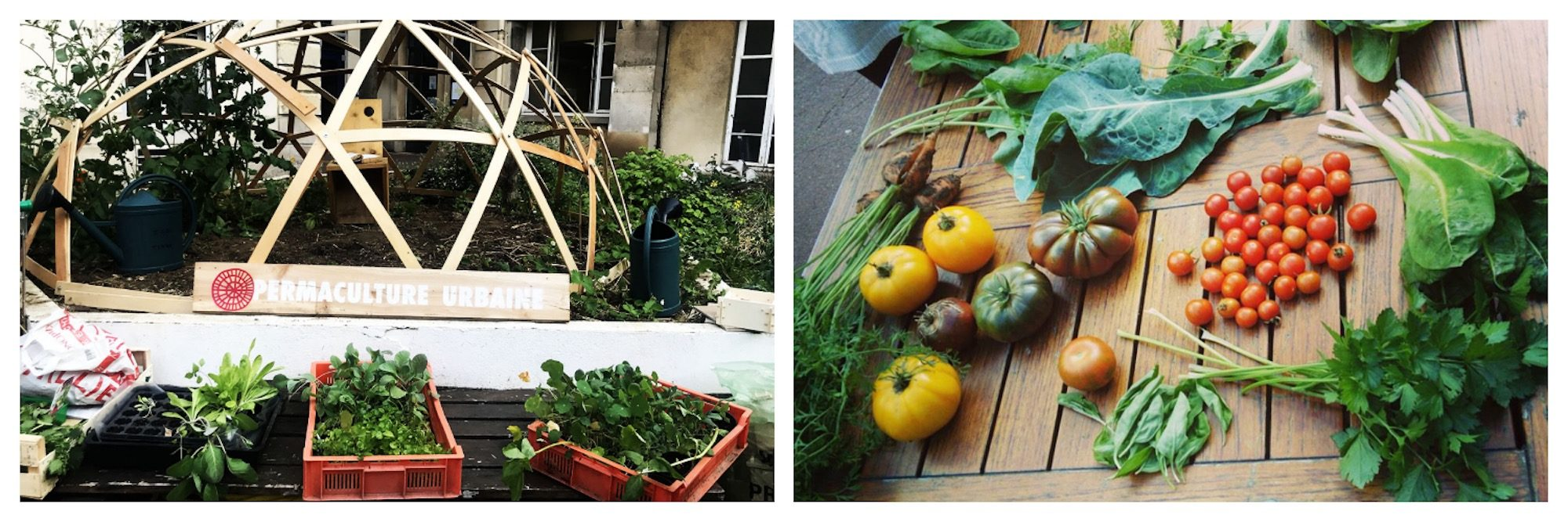 Even if it's winter in Paris, learning how to set up your own urban garden is always a good idea, especially at arty community headquarters Les Grands Voisins.