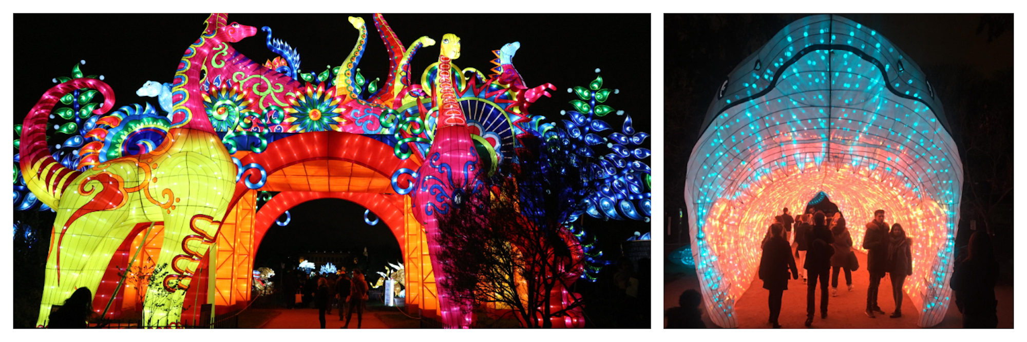 This Christmas in Paris, the Jardin des Plantes (garden of plants) put on an incredible show of colorfully-lit animal figures.