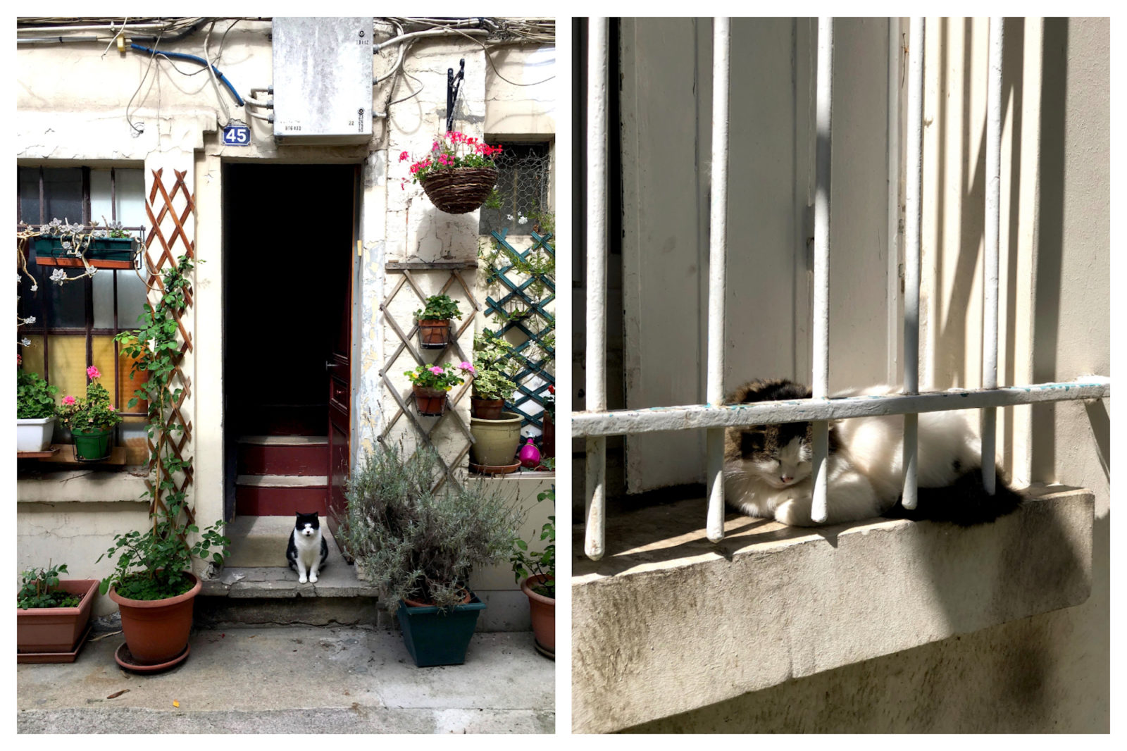 A black and white cat patiently sitting on a stone door step surrounded by plants and potted flowers in Paris (left). A white and brown cat sleeping on a window sill behind its irons bars in Paris (right).