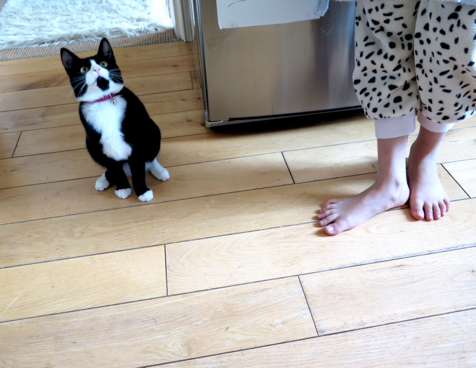 A black and white cat sitting on a kitchen floor looking upwards, next to a child's bare feet.