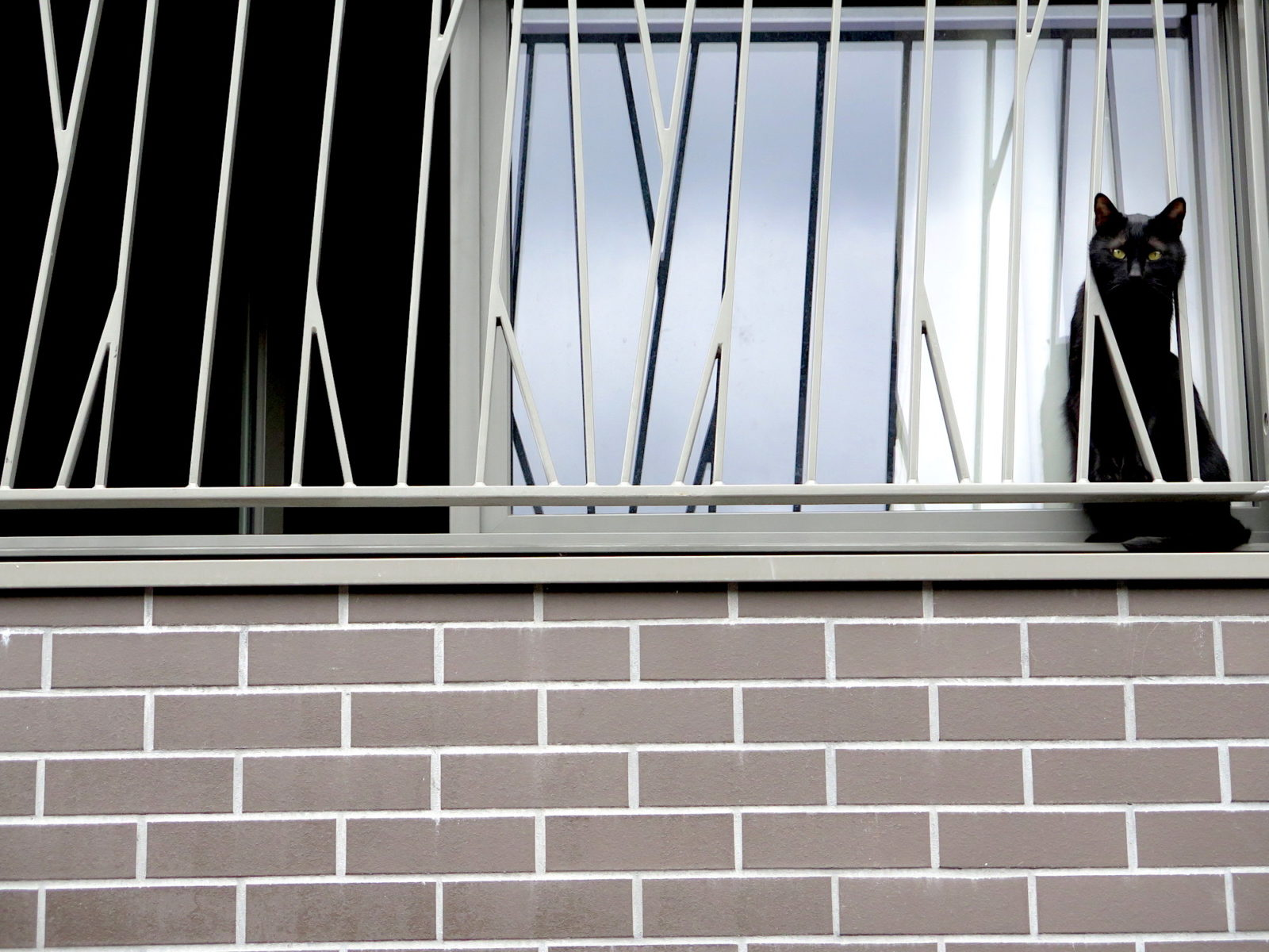 A black cat sitting on a window sill in Paris with its head stuck between the contemporary iron railings.