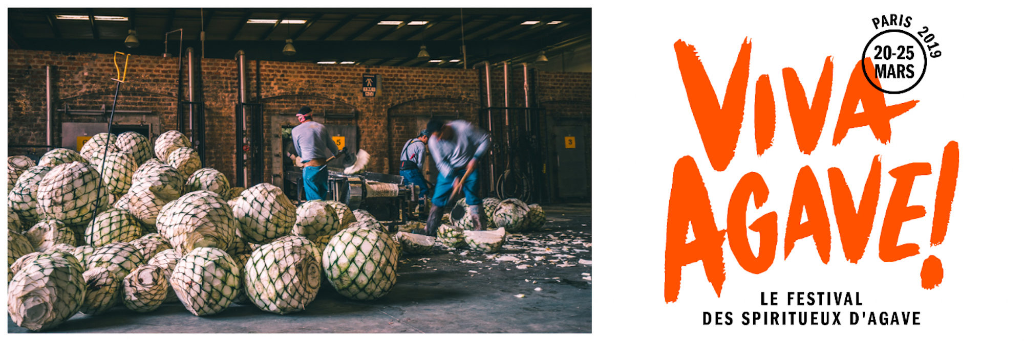 Events in Paris in March include Viva Agave spirits festival, for which these agave hearts are being chopped.