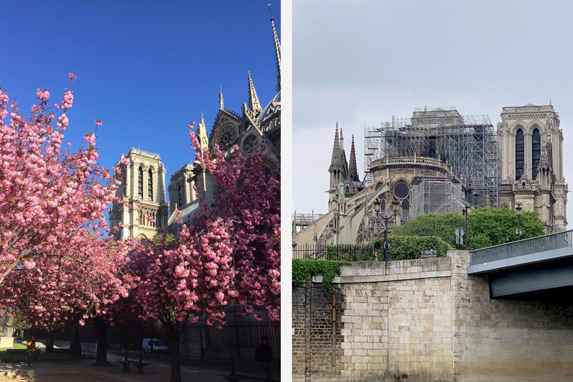 Notre Dame Cathedral in Paris, surrounded by flowering pink cherry blossom before the fire (left). Notre Dame after the terrible fire in Paris in April 2019 (right).