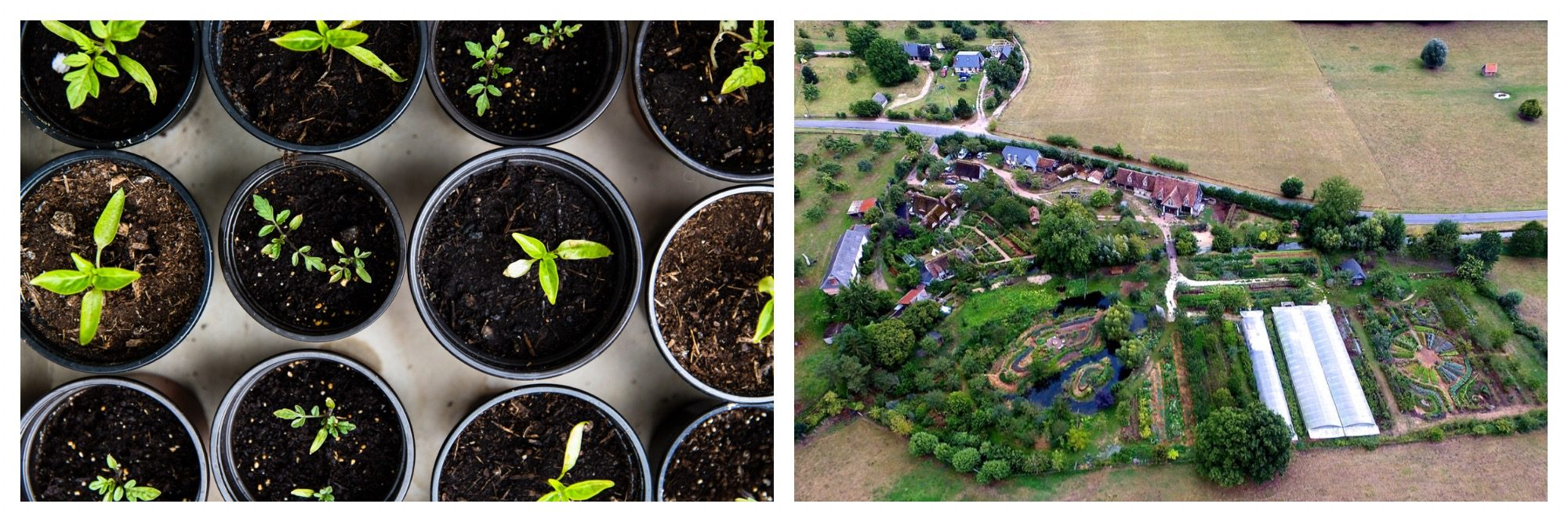 Seedlings being prepared for permaculture (left), like on this farm in France (right).