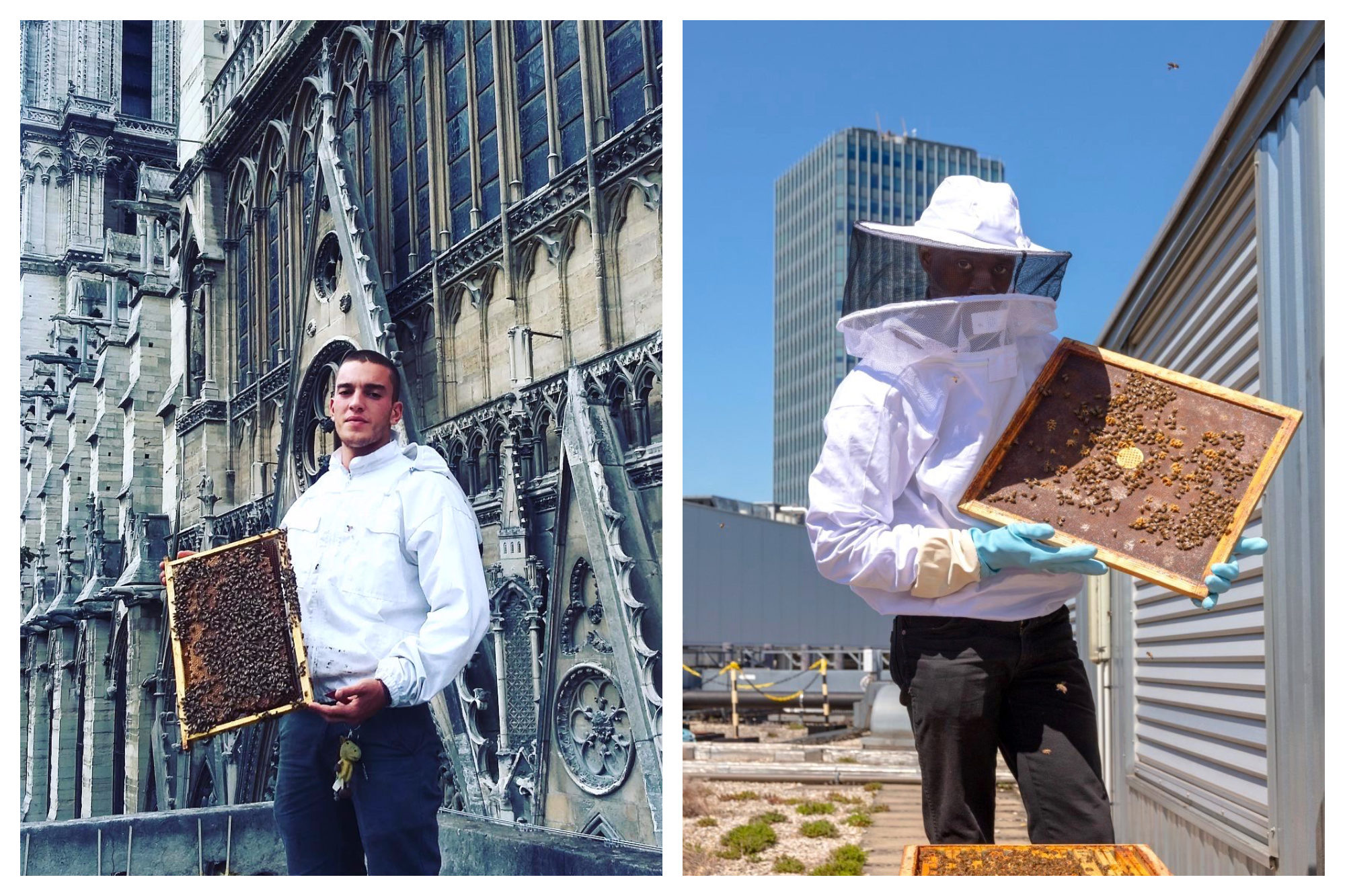 Beekeeper holding up a panel from his beehive (left and right).