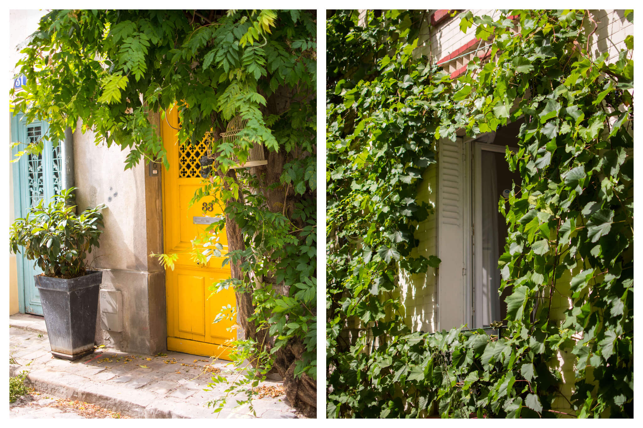 On left: A bright, mustard-yellow door can't hide behind the drooping vines on rue des Thermopyles in Paris' 14th arrondissement. On right: An open window sits open on a sunny day, light shining brightly on the abundance of leaves surrounding it.