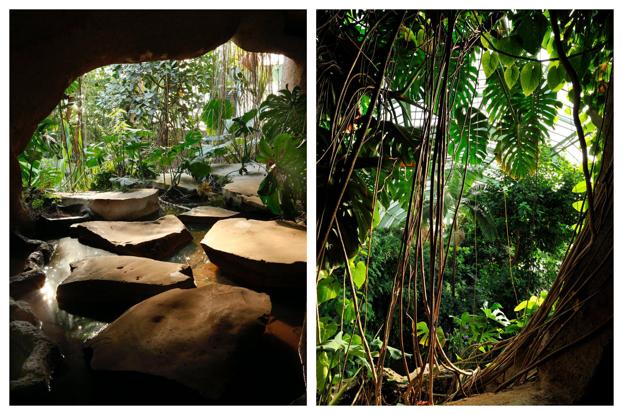On left: Stepping stones zig-zag their way out of a cavern at the Grandes Serres du Jardin des Plantes, a botanical garden in Paris' Latin Quarter. On right: leafy palms catch the light in the greenhouse of the Grandes Serres du Jardin des Plantes.