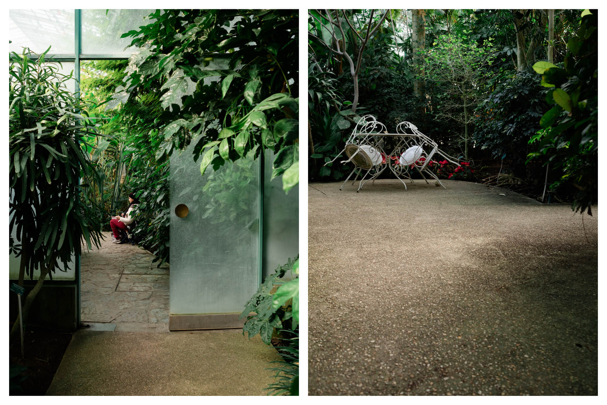 On left: An artist sits among the leaves of the Serres d'Auteuil, in Paris' 16th arrondissement, sketching. On right: Empty chairs are propped up on their table on the patio in the main greenhouse of the Serres d'Auteuil, waiting for a visitor to come sit with their snack.