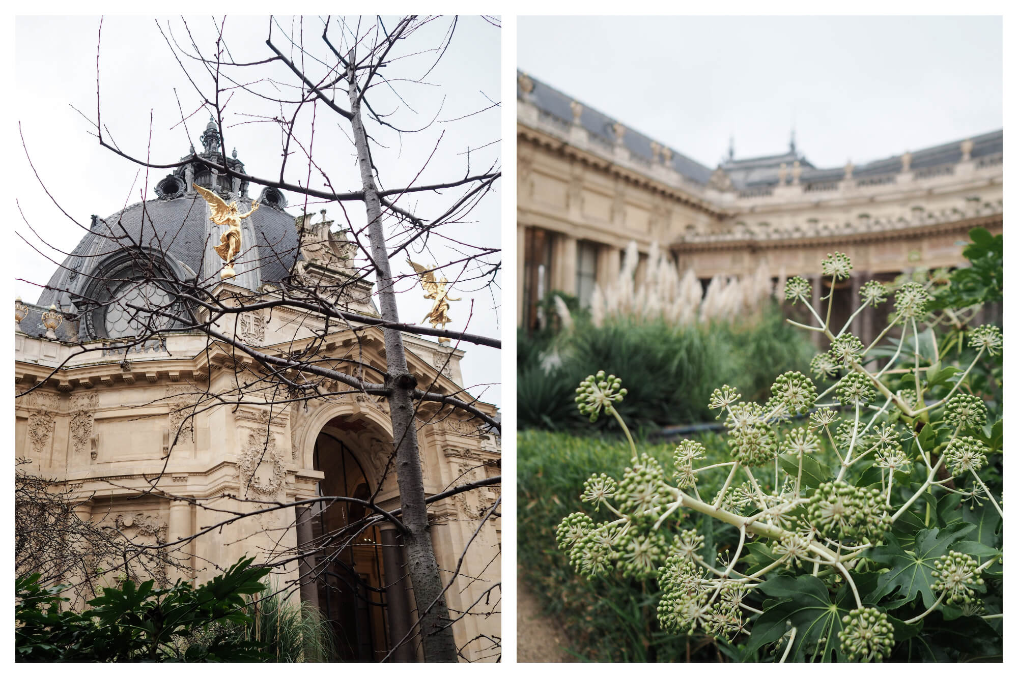 On left: The spindly branches of a tree reach skyward, with the dome of the Petit Palais, Paris' city art museum, rising in the background. On right: Bouncy little flowers begin to sprout in the garden of the Petit Palais, located on the Champs Elysées.