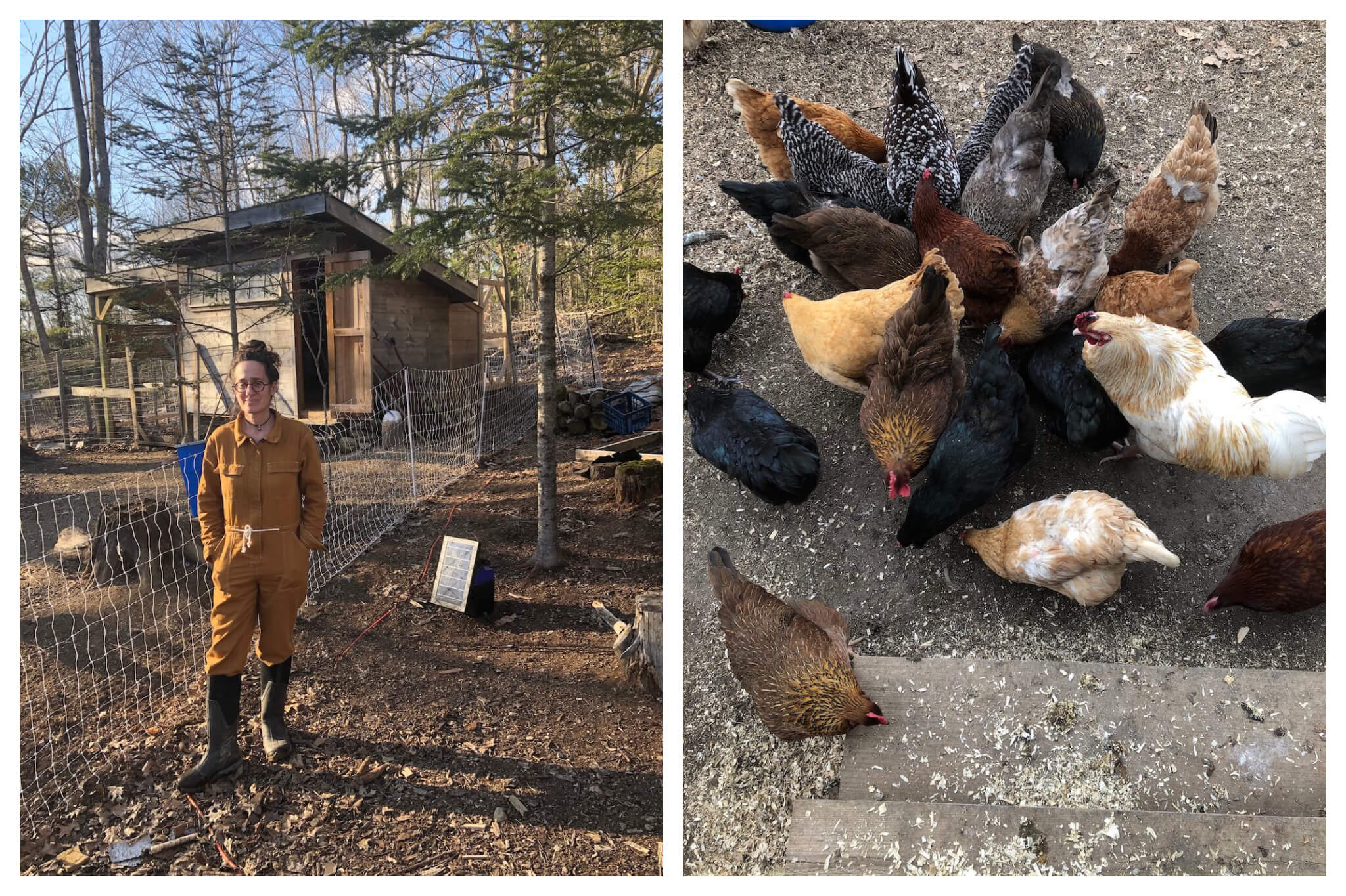 Left: Erica stands near the chicken coop on her farm in Maine. Right: Erica's chickens gather to eat on her farm in Maine.
