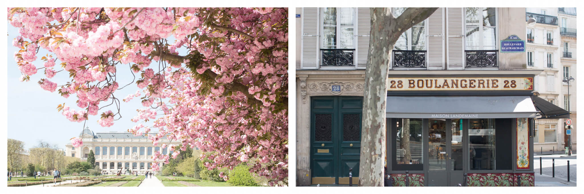 On left: A wave of pink cherry blossoms frame a view of the Grande Galerie de l'Évolution in Paris' botanical garden, the Jardin des Plantes, in the 5th arrondissement. On right: One of Rebecca's favorite places for a pastry is Maison Landemaine on Boulevard Beaumarchais in Paris' Marias neighborhood.