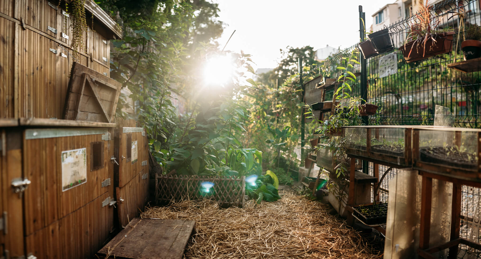 Golden sunlight beams through leafy plants at La REcyclerie, a community space and restaurant in Paris' 18th arrondissement.