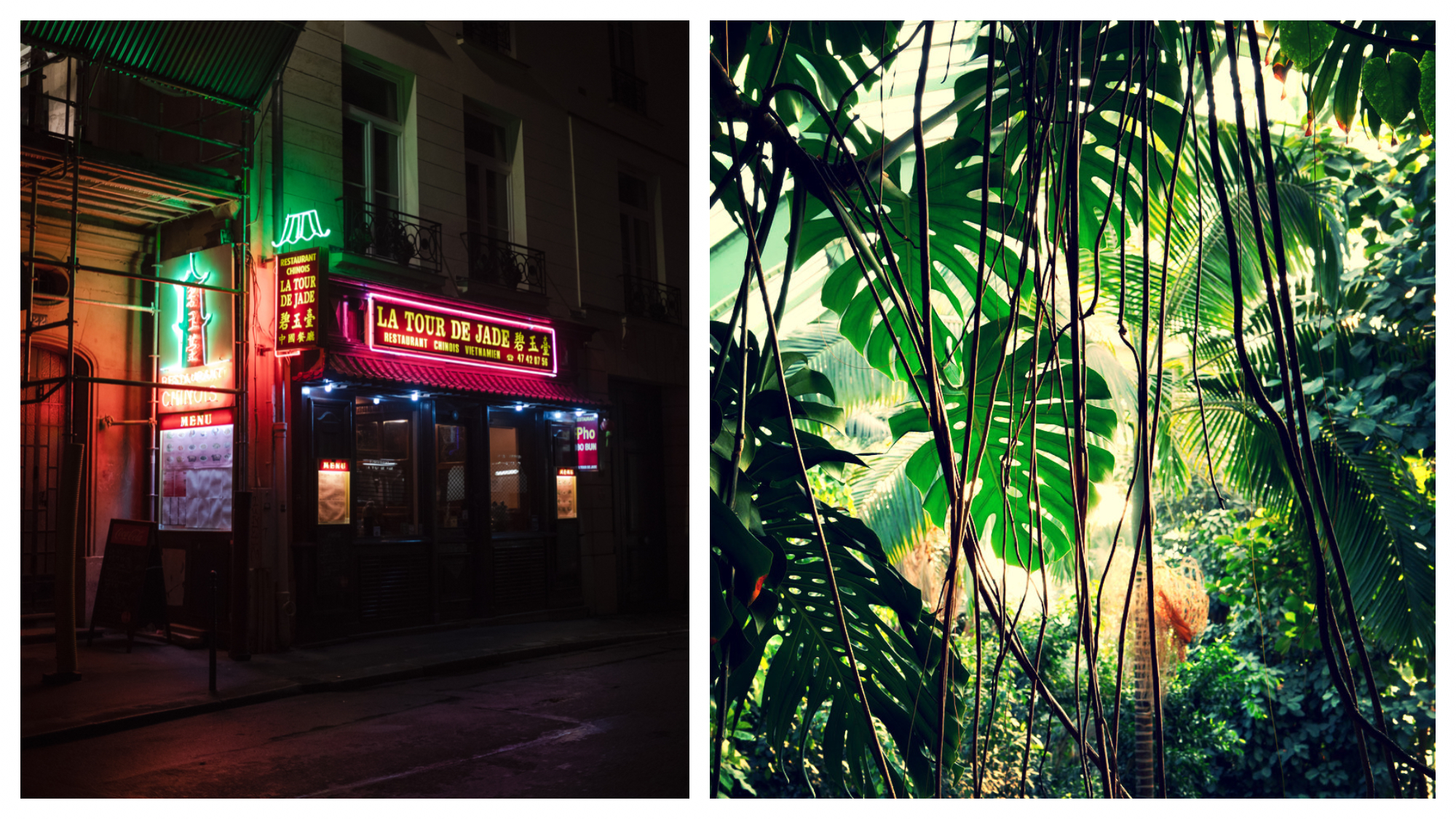 """Left: Neon signs from the restaurant """"La Tour de Jade"""" shine bright in the night in Paris' Chinatown, Right: Sun shines from above and illuminates the colors of the plants in the greenhouse of the Jardin de Plantes in Paris"""