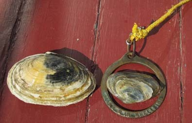 clam_ring_with_clams