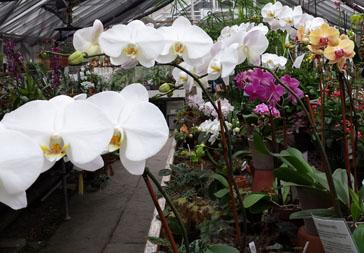 14-orchids_-_364_x_253