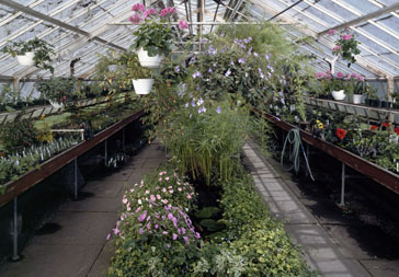 Lyman Estate, Waltham, MA. Greenhouse interior.
