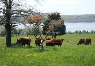 9_-_farm_pastures_364_x_253