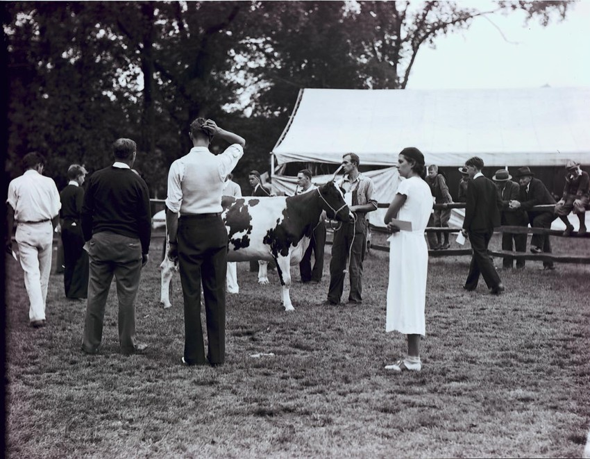 People viewing a cow, Topsfield Fair, 1933.