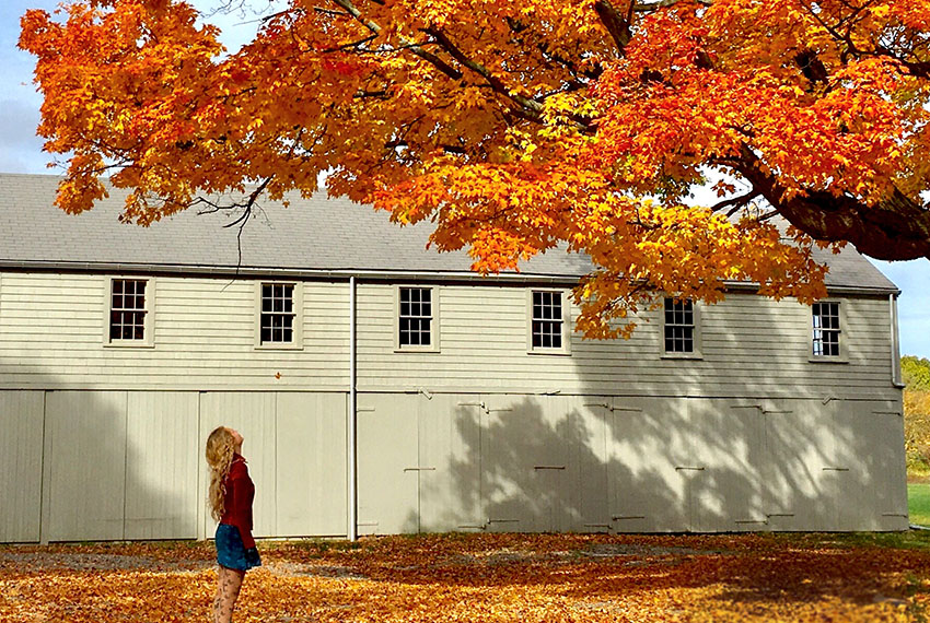 A girl looks at an autumn-hued tree in front of the barn at Spencer-Peirce-Little Farm. Photo by Carrie Hershenson (@carriesanity).