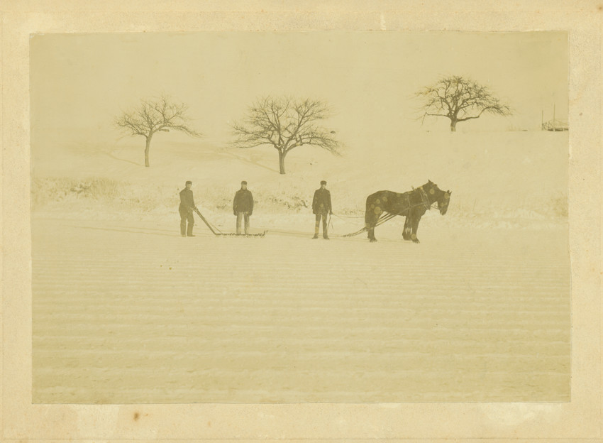 Three men cut ice using a device harnessed to two horses