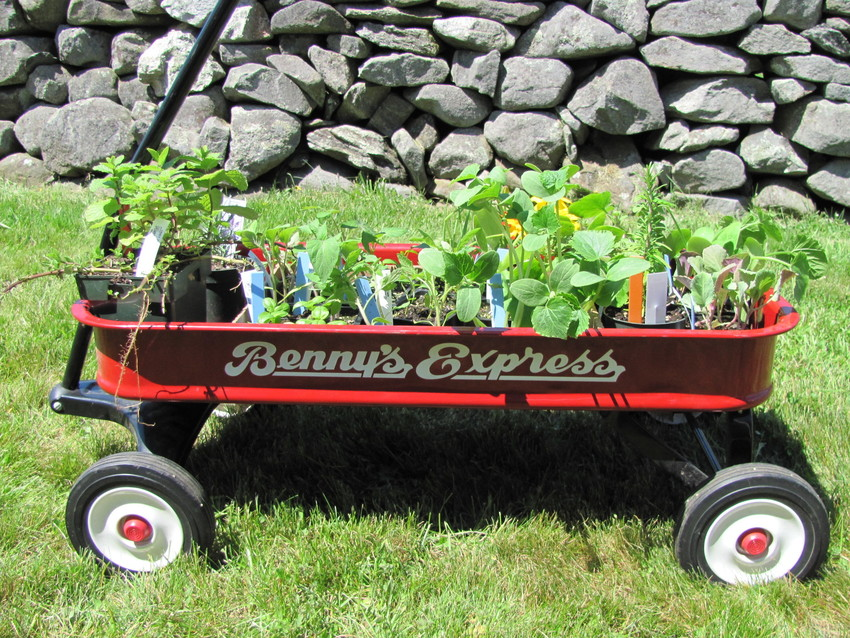 Red wagon full of plant seedlings.