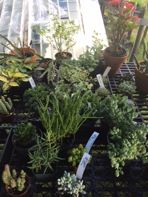 Small potted plants on display.