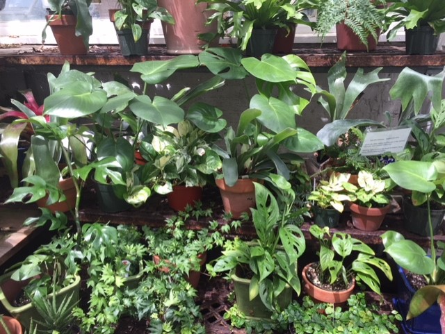 Small houseplants in pots on display.