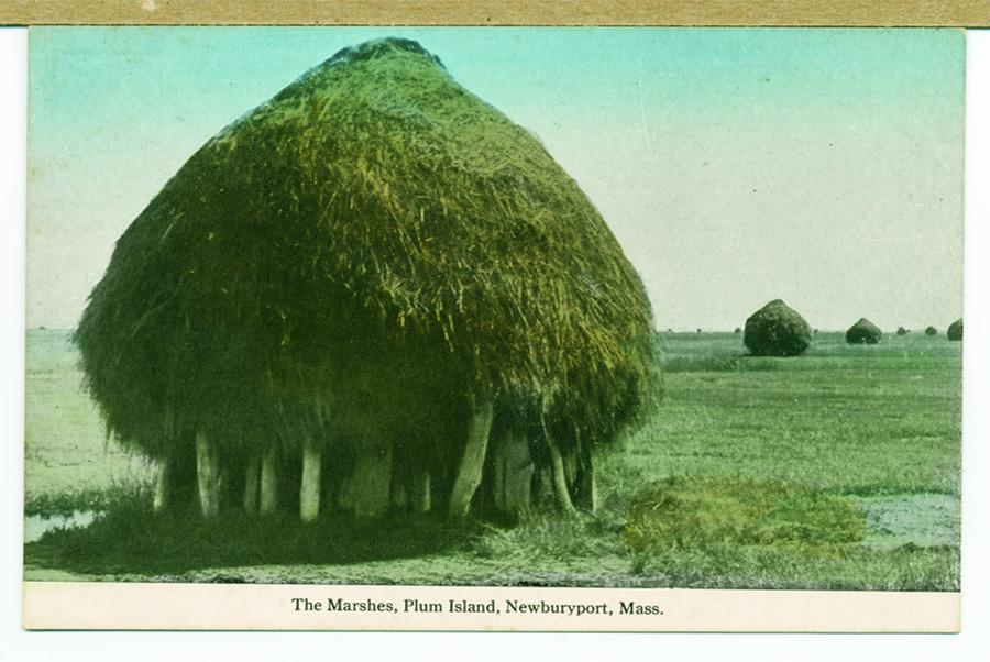 Salt Hay Marsh in Newburyport