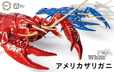 Fujimi  Biology Research 24EX-2 Procambarus Clarkii / Louisiana Crawfish (White) Biology Edition