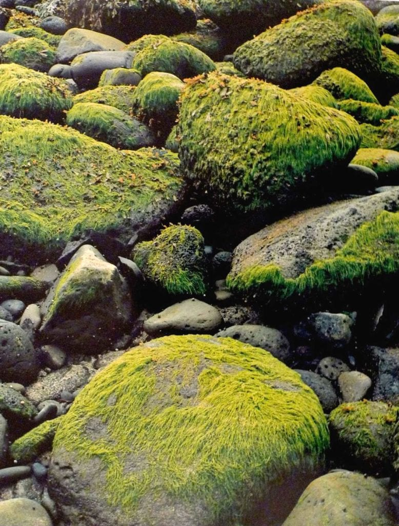 Eliot Porter, Sea Weed Low Tide