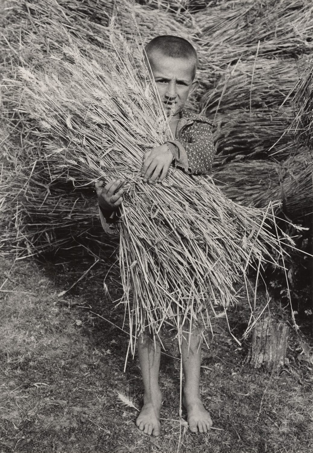 A Young Boy with a Bundle of Wheat in his Hands, Albania