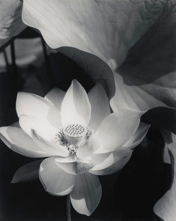 Lotus, Mount Kisco, New York