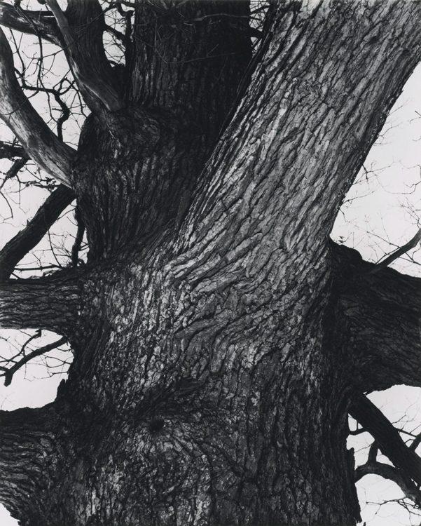 Venerable Tree Trunk