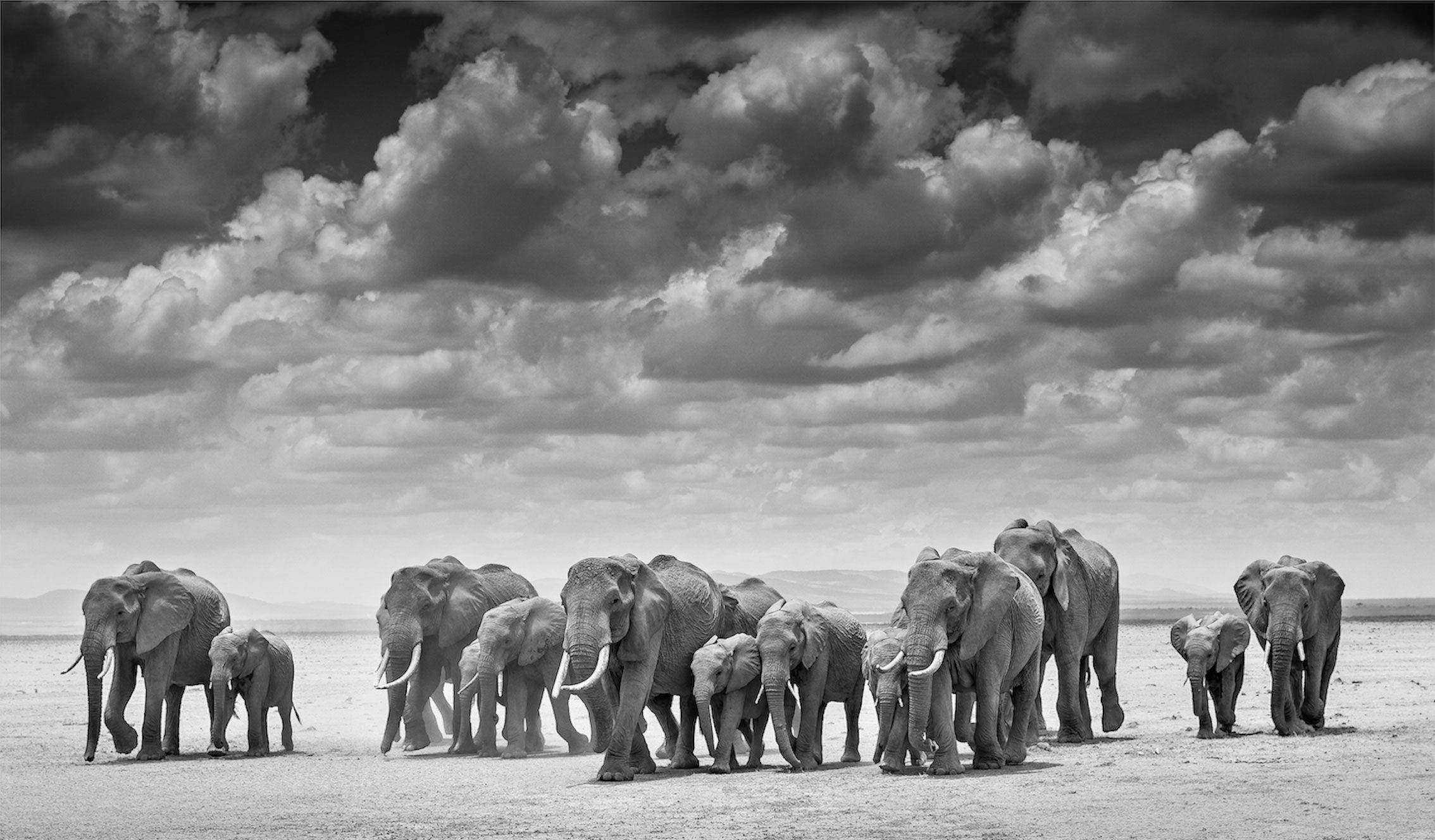 The Crossing, Amboseli, Kenya