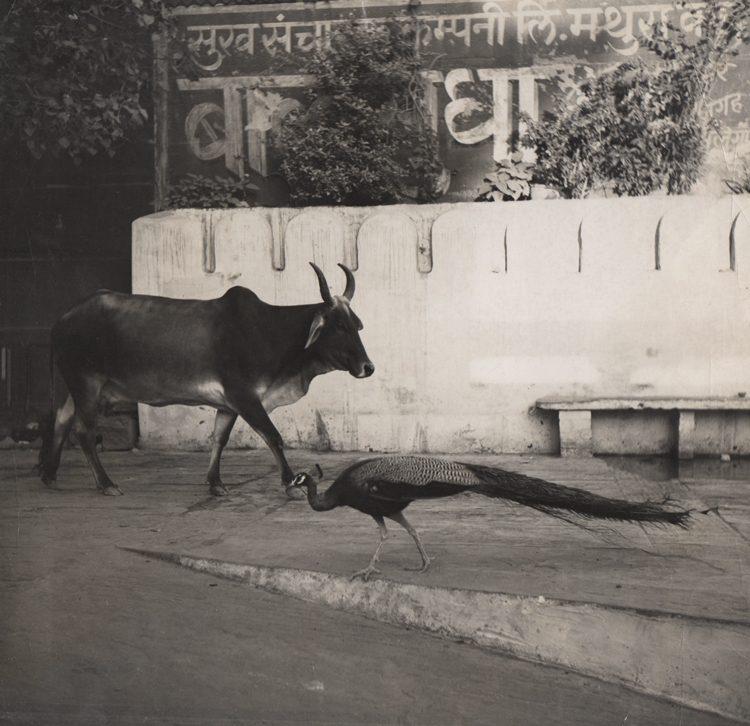 Untitled, Brahmin India