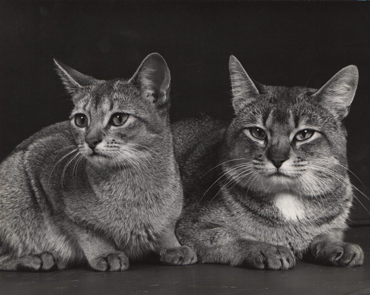 Untitled, Cat and Kitten