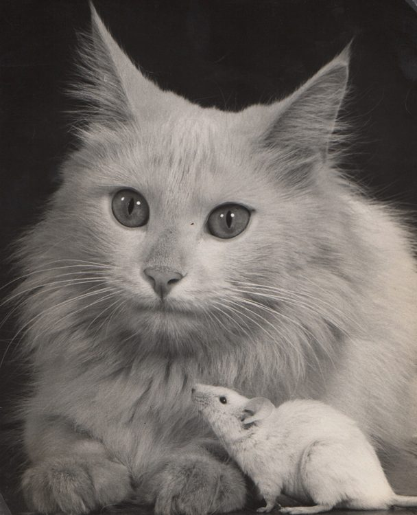 Untitled, Cat and Mouse