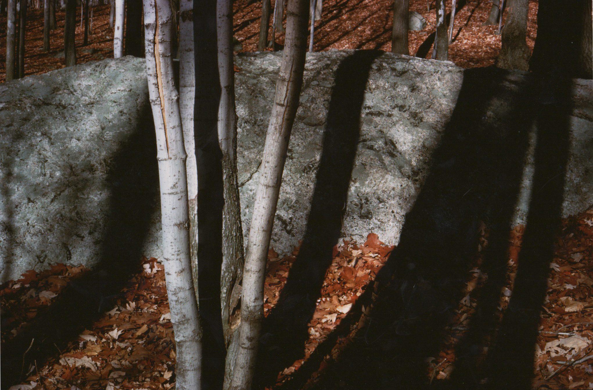 Rock and Tree Shadows (Idiographos #26)