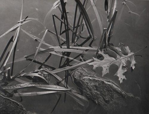 Oak Leaf, Lake Tiorati