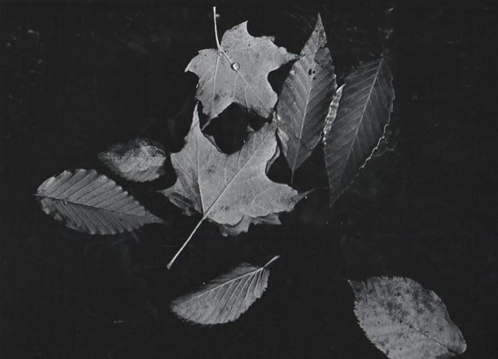 Fallen Leaves in Pond #2