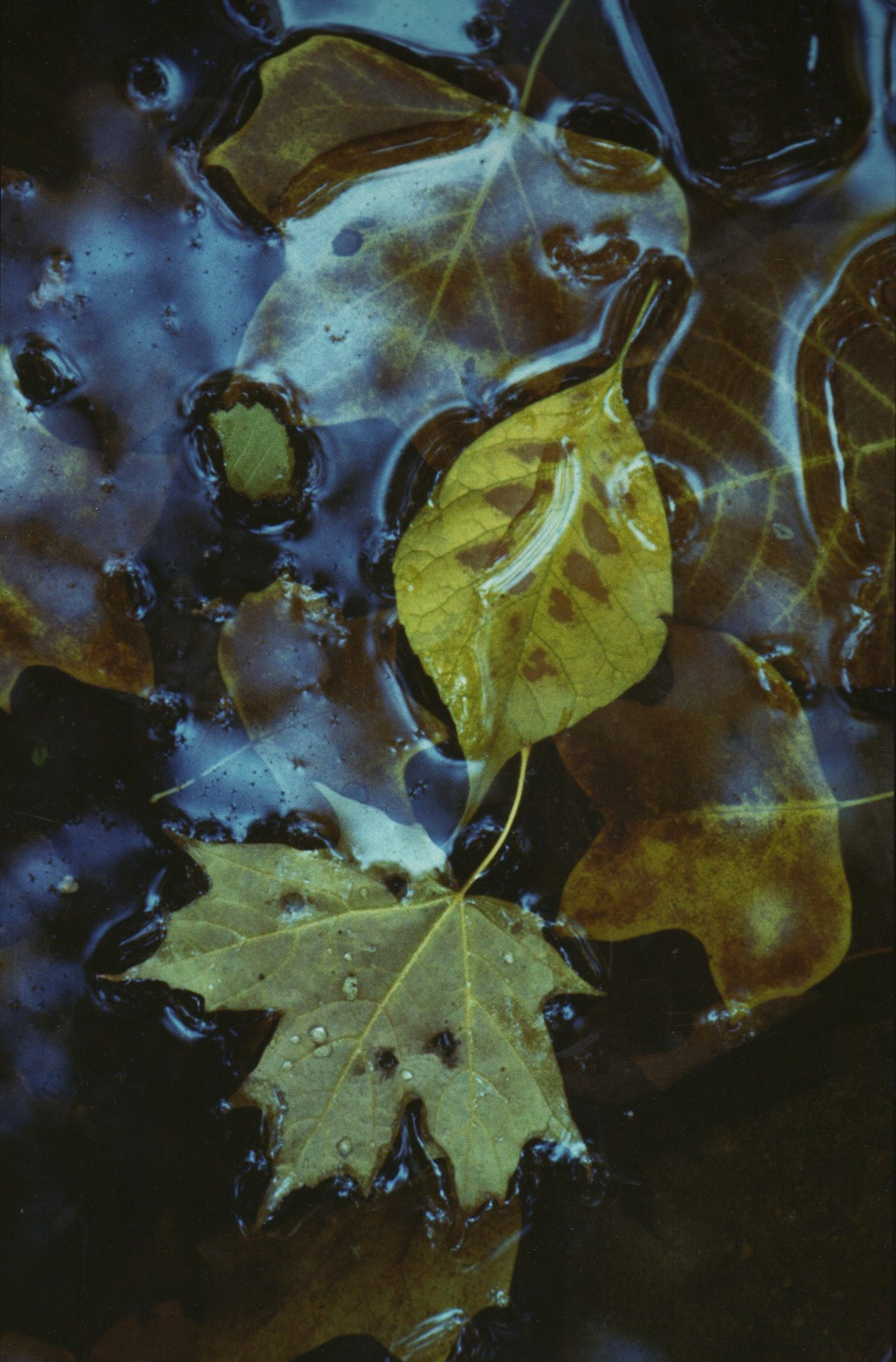 Fall Leaves in Lake