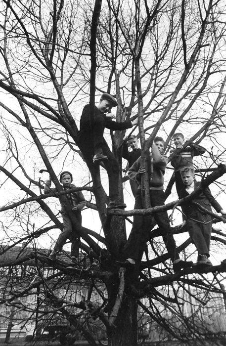 Boys in Tree, Berlin