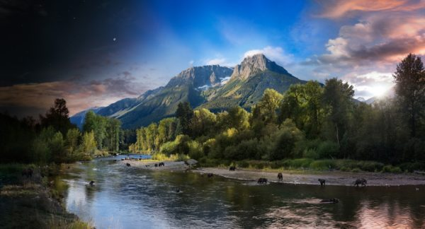Grizzly Bears, Bella Coola, British Columbia, Day to Night