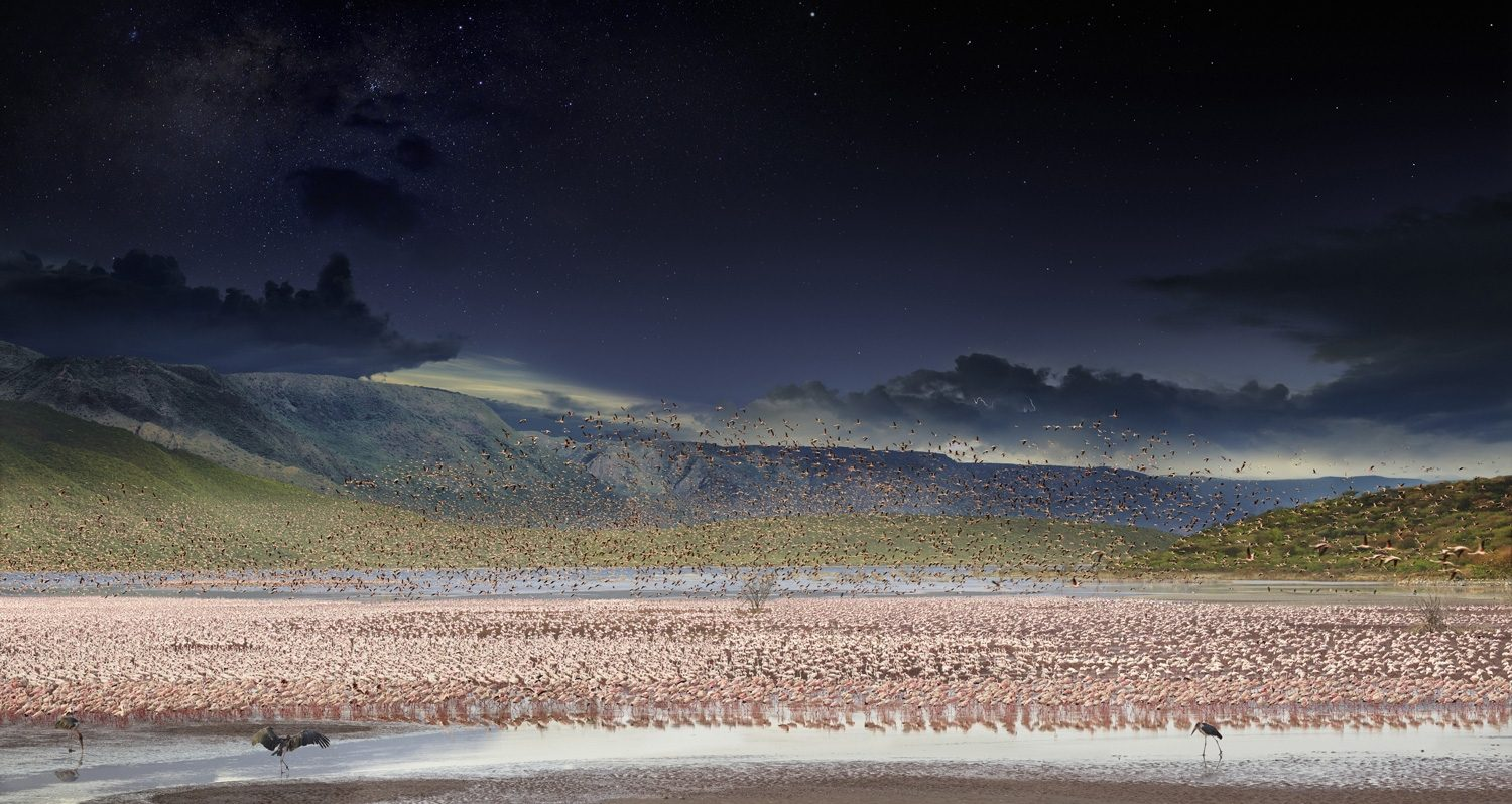 Flamingos, Lake Bogoria, Kenya, Africa, Day to Night
