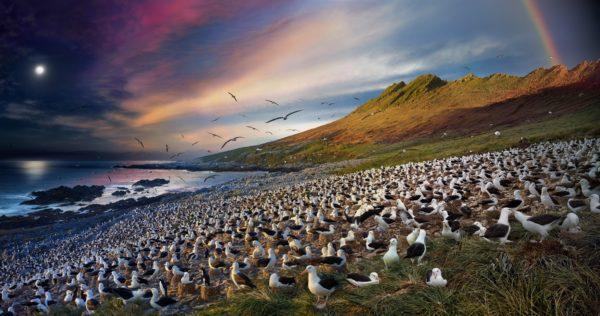 Albatross, Steeple Jason, Falkland Islands, Day to Night