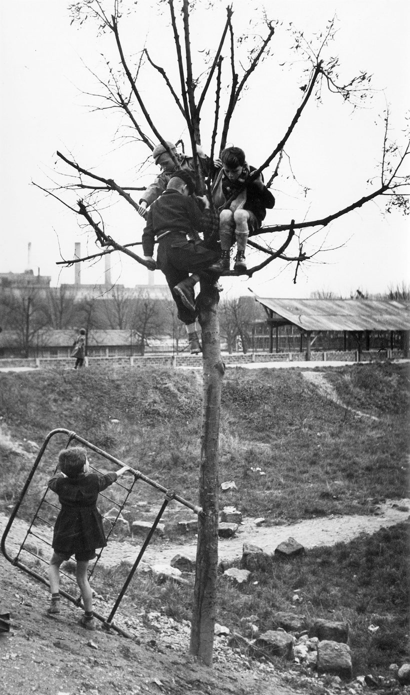 Enfants sur arbre (Children in Tree)