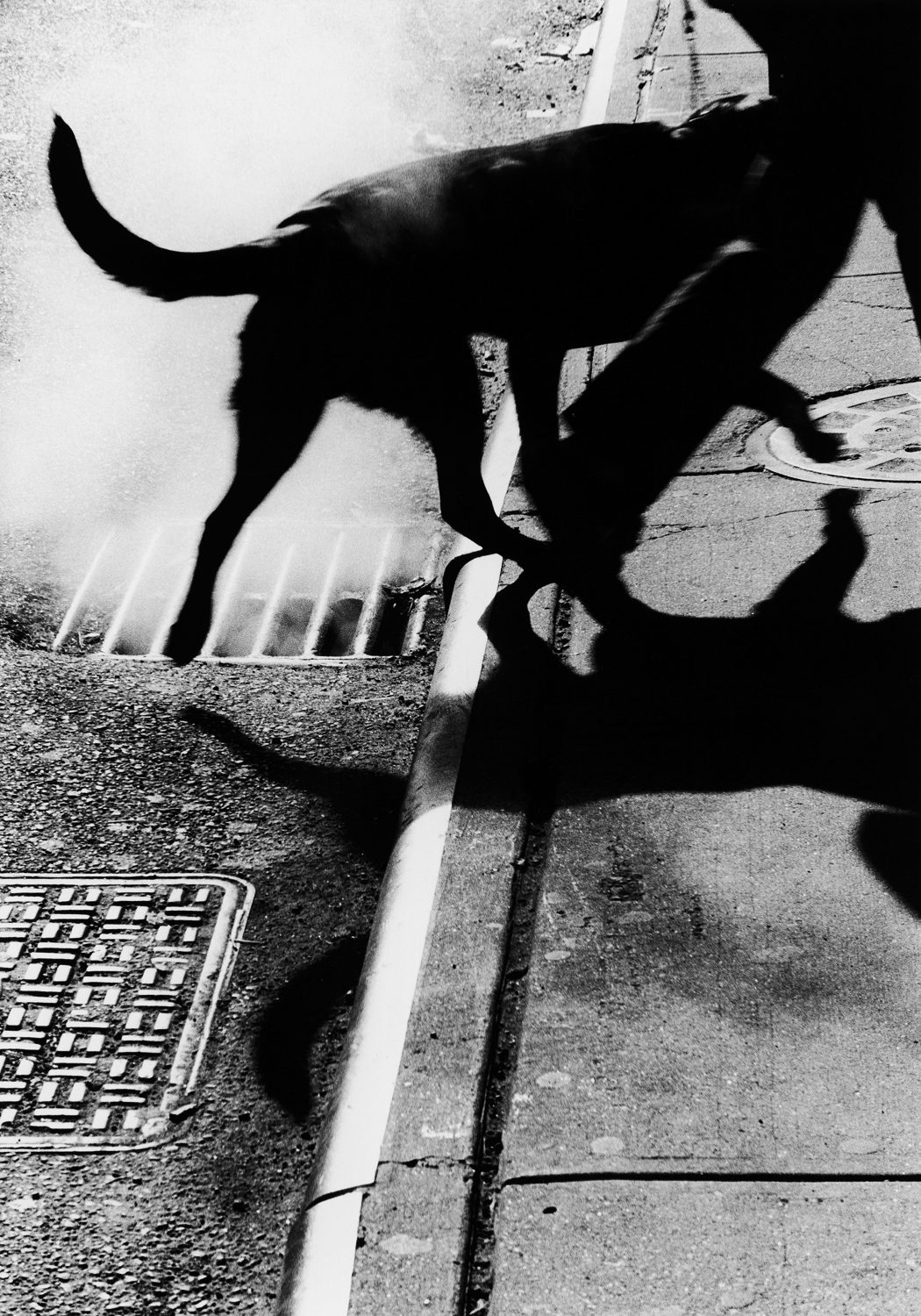 New York (Dog and Gutter)